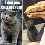 Can-I-has-Cheezburger.jpg